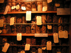 Witches-Herbal-Cupboard